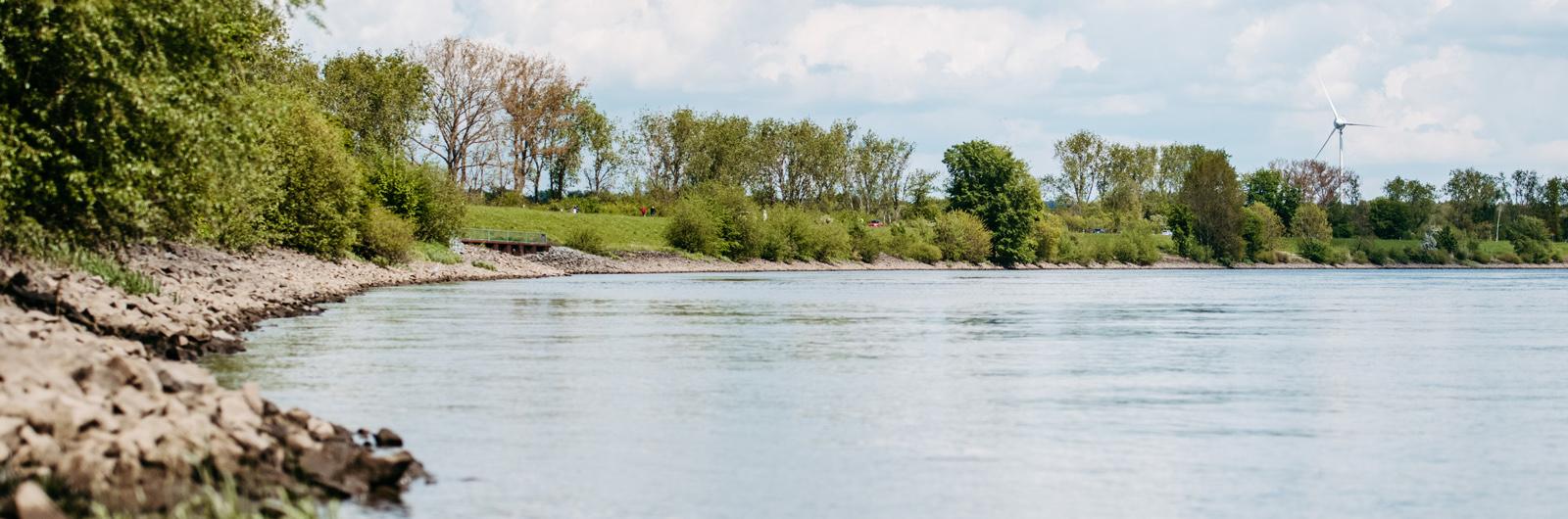 Elbdeich Hochwasserschutz Borghorster Elbwiesen